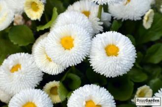 BotanicalPrint (1)