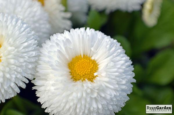 BotanicalPrint (2)