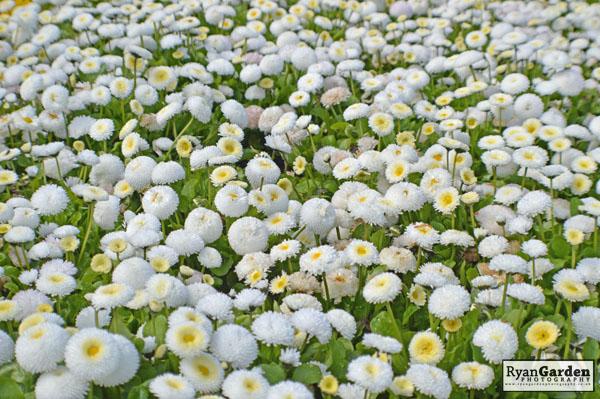 BotanicalPrint (3)