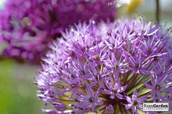 BotanicalPrint08