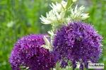 BotanicalPrint09
