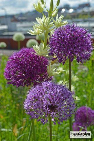 BotanicalPrint10