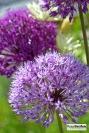 BotanicalPrint11
