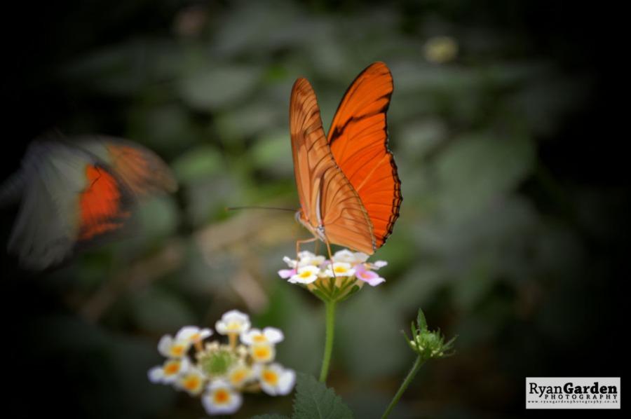 Wildlife04