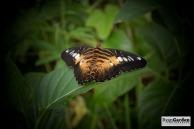 Wildlife05