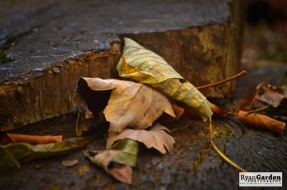 autumnleaves01
