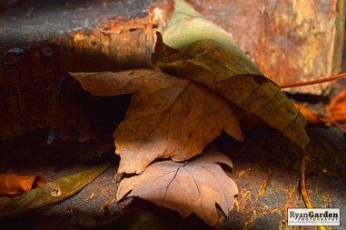 autumnleaves02