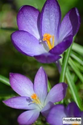 Springtime04
