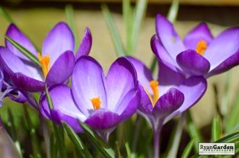 Springtime05