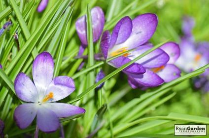 Springtime06