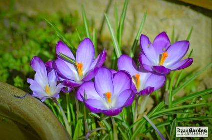 Springtime07