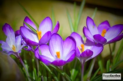 Springtime08