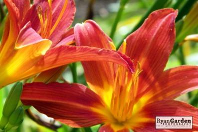 Botanical01