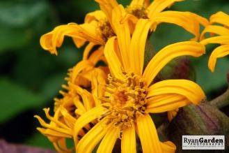 Botanical02