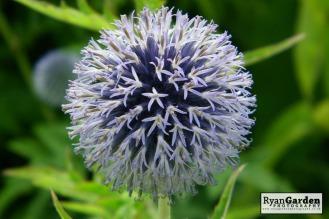 Botanical03