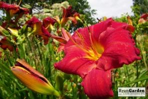 Botanical05
