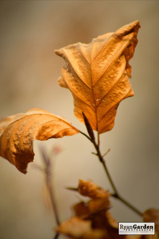 AutumnGold01