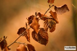 AutumnGold02
