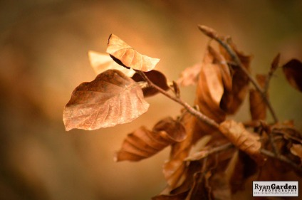 AutumnGold03