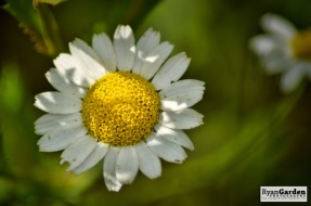Wildflowers01