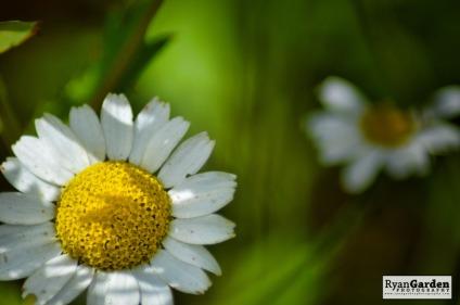 Wildflowers02