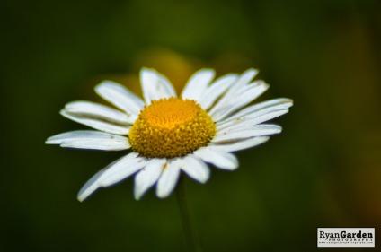 Wildflowers03
