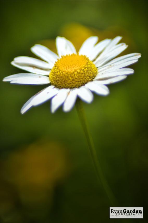 Wildflowers04