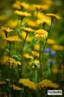 Wildflowers07