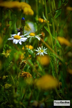 Wildflowers09