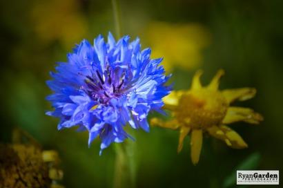 Wildflowers10