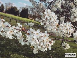Blossom04