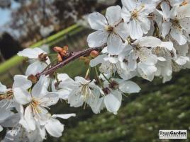 Blossom05
