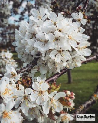 Blossom06