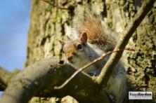 Squirrel03