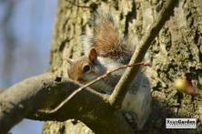 Squirrel04