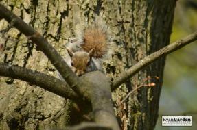 Squirrel05