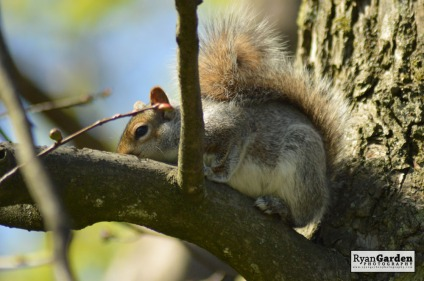 Squirrel06