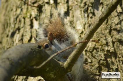 Squirrel07