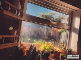 Window08