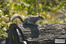 WoodlandSquirrel05