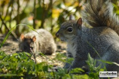 WoodlandSquirrel07