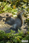 WoodlandSquirrel08