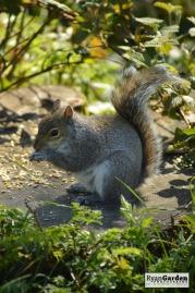WoodlandSquirrel08