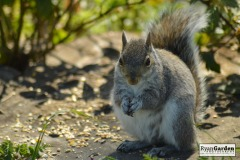WoodlandSquirrel09