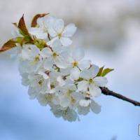 Blossom Pastels